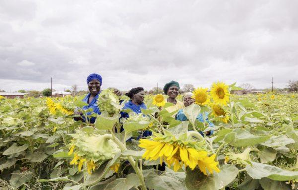 Coltivazione di semi di girasole da parte delle donne del Madimbo Communal Garden sostenuto da Cesvi e Cooperazione Italiana. Foto di Andrea Frazzetta