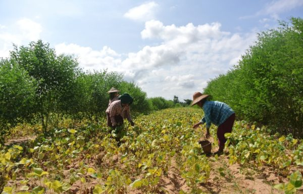 Myanmar - vita nei campi