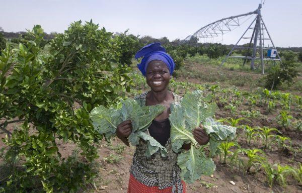 Nello stesso terreno degli aranceti, lo spazio disponibile tra i filari è destinato a colture stagionali, che contribuiscono al soddisfacimento dei bisogni alimentari della comunità. Foto di Giovanni Diffidenti.