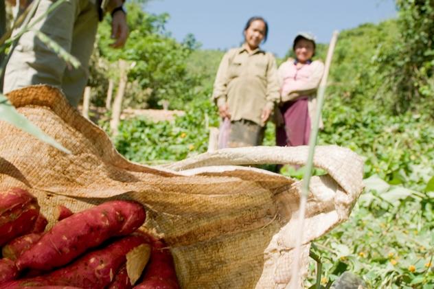 laos-agricoltura