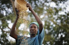 A woman from the Daborin Single Mothers Association winnows rice at a small processing plant in the northern Ghanaian town of Bolgatanga