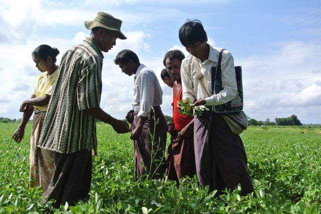 Sviluppo agricolo in Myanmar