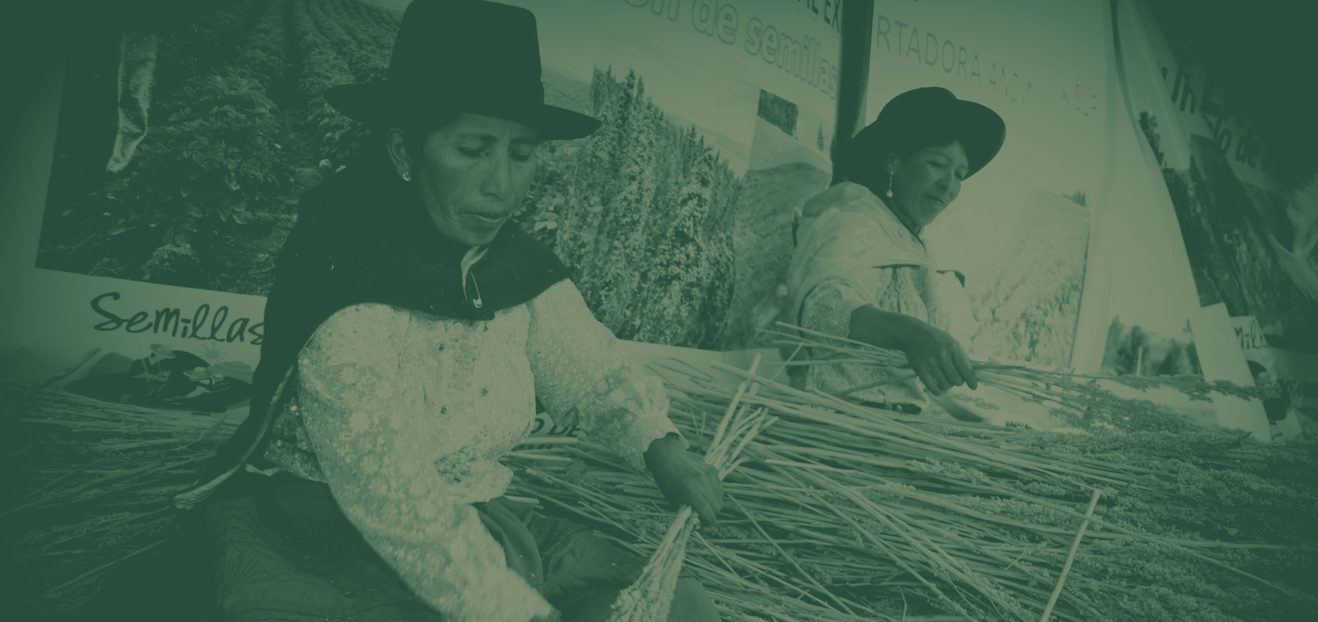 Quinoa, l'oro delle Ande