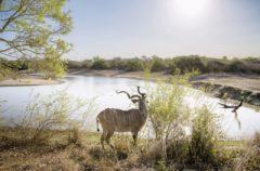 Parco del Limpopo, Sudafrica. Foto di Andrea Frazzetta.