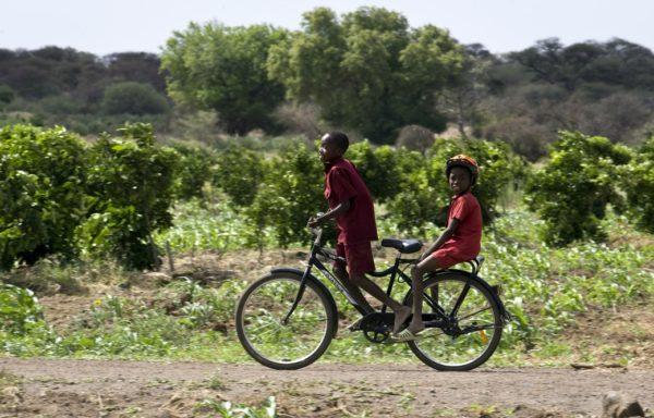 In bici tra i filari in Zimbabwe - Foto di Giovanni Diffidenti