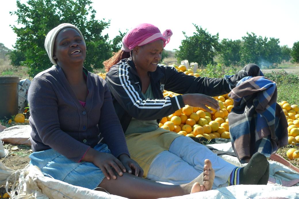 raccolto_arance_zimbabwe
