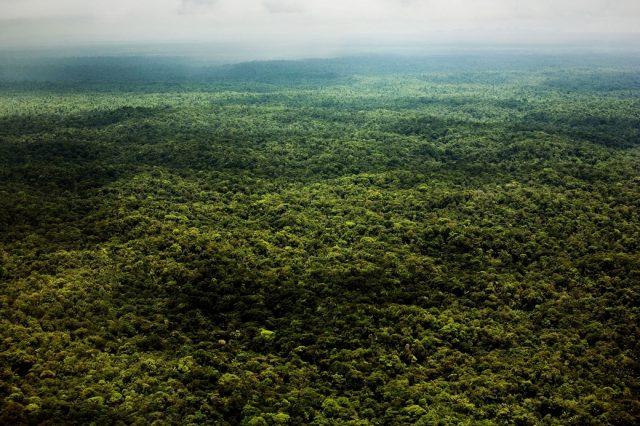 Foresta amazzonica madre de dios ph. Fabio Cuttica