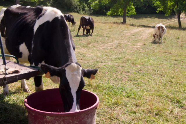 Cesvi ha avviato a d Amatrice un progetto a supporto degli agricoltori e allevatori colpiti dal terremoto.