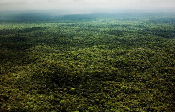 La Foresta Amazzonica. Foto di Fabio Cuttica