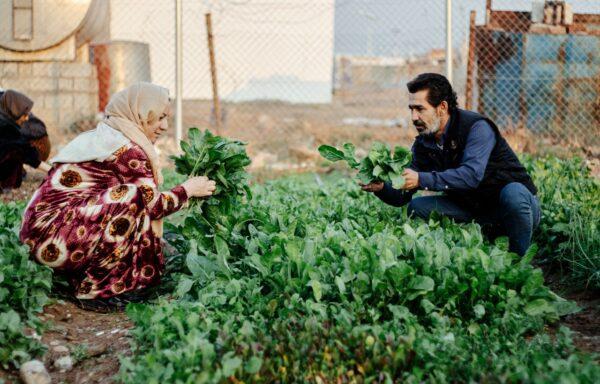 Kurdistan iracheno